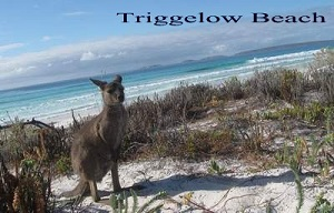 Triggelow Beach with Kangaroo